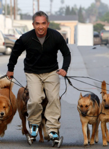 Cesar_Millan_on_Rollerblades-web