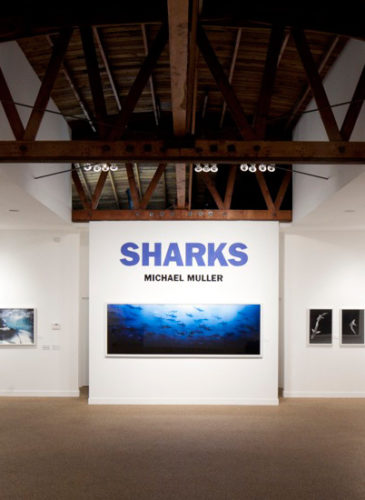 la_gallery_sharks_interior_003-web