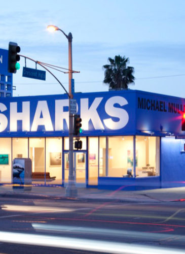 la_gallery_sharks_interior_web